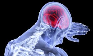 brain-3168269_1920-300x181